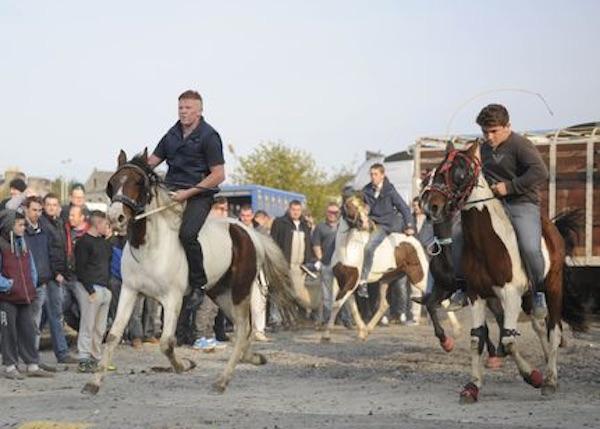 travellershorses.jpg