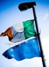 tricolourploughflags.jpg